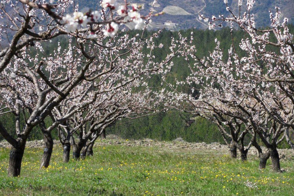 Culture et verger bio en Drôme provençales