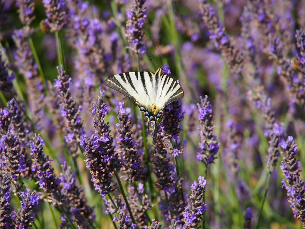 Insectes et culture bio en Baronnies